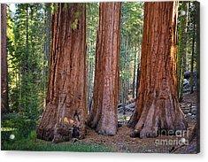 Three Graces Yosemite Acrylic Print