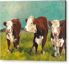 Three Herefords Acrylic Print by Cari Humphry
