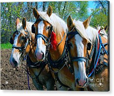 Acrylic Print featuring the photograph Three Horses Break Time  by Tom Jelen