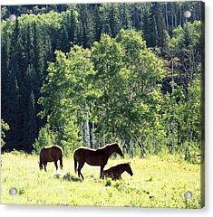 Three Horses Acrylic Print by Gerry Bates