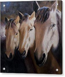 Three Horses Acrylic Print by Terri  Meyer