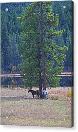 Three Horses Under A Pine Tree Digital Oil Painting Acrylic Print by Sharon Talson