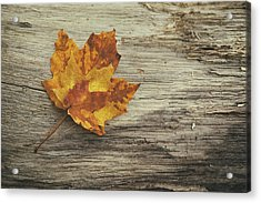Three Leaves Acrylic Print by Scott Norris