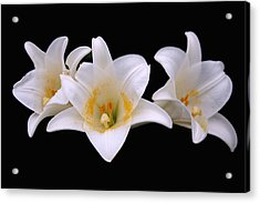 Acrylic Print featuring the photograph Three Lilies by Andy Lawless