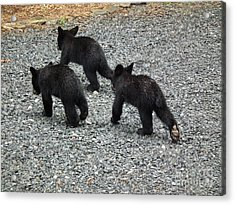 Acrylic Print featuring the photograph Three Little Bears In Step by Jan Dappen