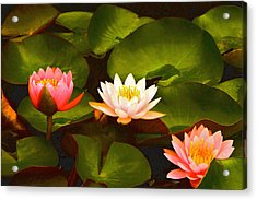 Three Lovely Gracious Waterlilies Acrylic Print by Byron Varvarigos