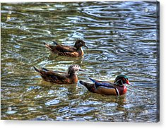 Three Mallard Ducks Acrylic Print