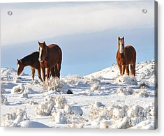 Three Mustangs In Snow Acrylic Print