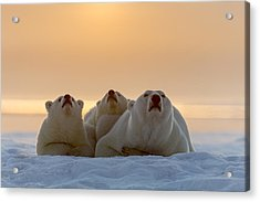 Three Noses Acrylic Print by Tim Grams