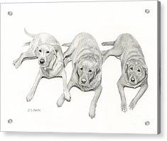Three Of A Kind Acrylic Print by Sarah Batalka