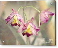 Three Orchid Beauties Acrylic Print by Sabrina L Ryan