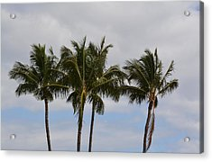 Three Palm Trees Acrylic Print