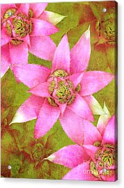 Three Pink Ladies Acrylic Print by Claudia Ellis