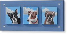 Three Pups Acrylic Print by Stuart Swartz