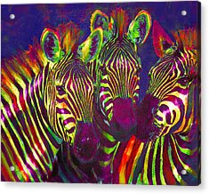Three Rainbow Zebras Acrylic Print by Jane Schnetlage