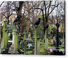 Three Ravens Acrylic Print