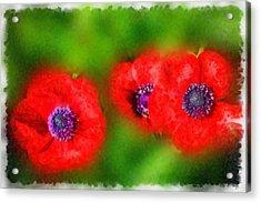 Three Red Popies  Acrylic Print