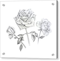 Acrylic Print featuring the drawing Three Roses by Elizabeth Lock