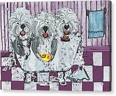 Three Sheepdogs In A Tub Acrylic Print