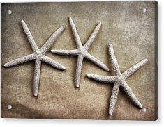 Three Starfish Acrylic Print by Carol Leigh