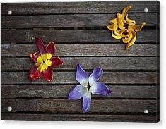 Three Acrylic Print by Svetlana Sewell