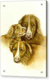 Three Toller Dogs Acrylic Print by Nan Wright