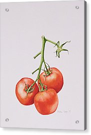 Three Tomatoes On The Vine Acrylic Print by Alison Cooper