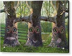 Three Trees Acrylic Print by Betsy Knapp