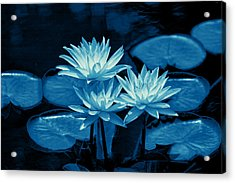 Three Water Lilies In Cyan Acrylic Print by Linda Phelps