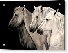 Three White Horses Acrylic Print by Nancy Bradley
