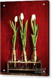 Three White Tulips Floral Acrylic Print