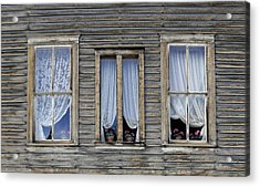 Three Windows Acrylic Print by Geraldine Alexander