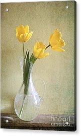 Three Yellow Tulips Acrylic Print by Diana Kraleva