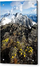 Thriving In Adversity Acrylic Print