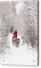 Through A Tunnel Of Snowy Trees Acrylic Print by Tim Grams