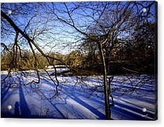 Through The Branches 4 - Central Park - Nyc Acrylic Print by Madeline Ellis