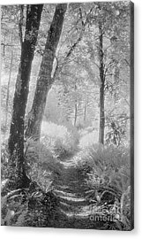 Through The Bush Acrylic Print by Colin and Linda McKie