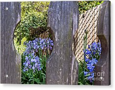 Acrylic Print featuring the photograph Through The Fence by Kate Brown