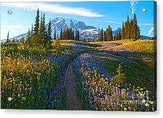 Through The Golden Meadows Acrylic Print by Mike Reid