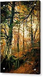 Through The Island Forest Acrylic Print