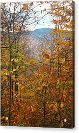 Acrylic Print featuring the photograph Through The Leaves by Alicia Knust