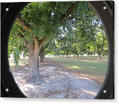 Through The Orchard Acrylic Print by Aaron Martens
