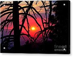 Through The Pines Landscape Acrylic Print