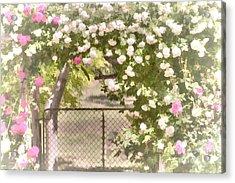 Acrylic Print featuring the photograph Through The Rose Arbor by Elaine Teague