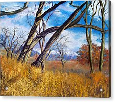 Through The Trees Acrylic Print by Julie Maas
