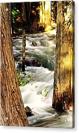Through The Trees Acrylic Print by Marty Koch