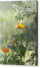 Through The Window  Acrylic Print by Tim Gainey