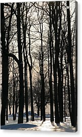 Through The Winter Trees Acrylic Print by Heather Allen
