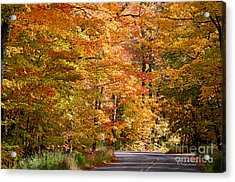 Acrylic Print featuring the photograph Through The Woods By D. Perry Lawrence by David Perry Lawrence