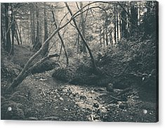 Through The Woods Acrylic Print by Laurie Search